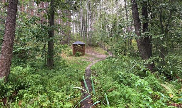 Коп с металлоискателем в лесу