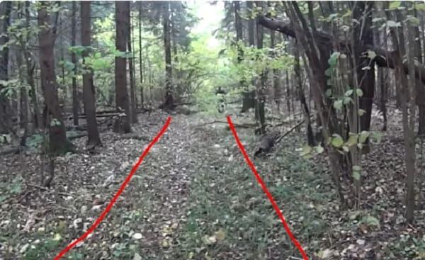 Как искать старую дорогу в лесу