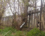 Старый забор - коп в огороде вдоль забора