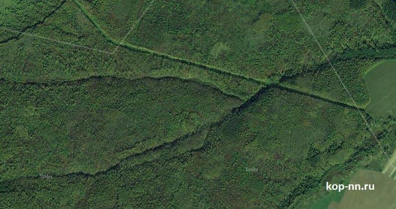 Лесной овраг