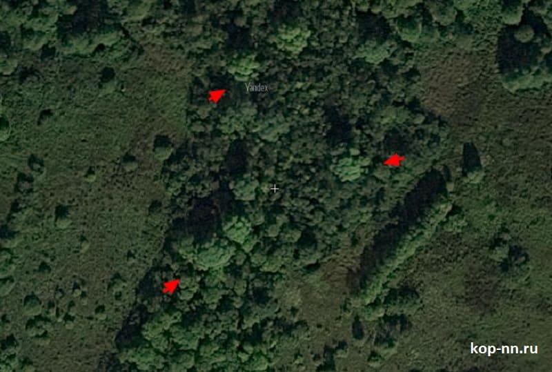 Старые большие деревья на спутниковом снимке