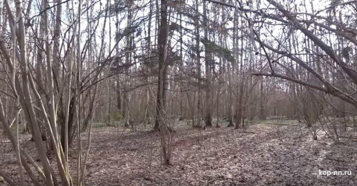 Разведка с металлоискателем в лесу