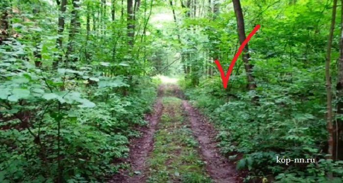 Коп по лесной дороге