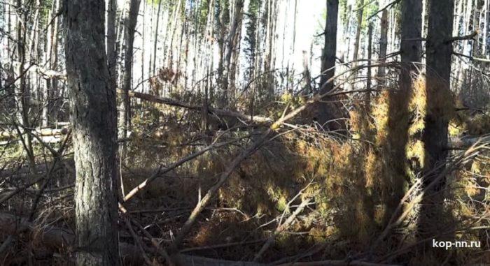 Завалы в лесу